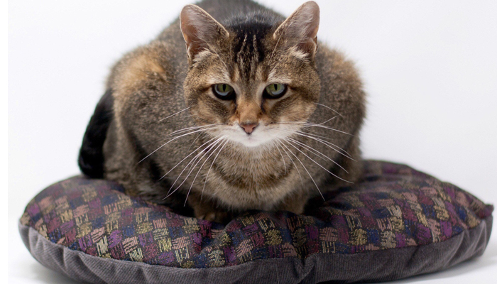 Cat friendly upholstery